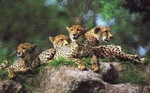 Dovolená Afrika - fotografie